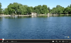 The call of a loon at Lake Cowdry in Alexandria, Minnesota