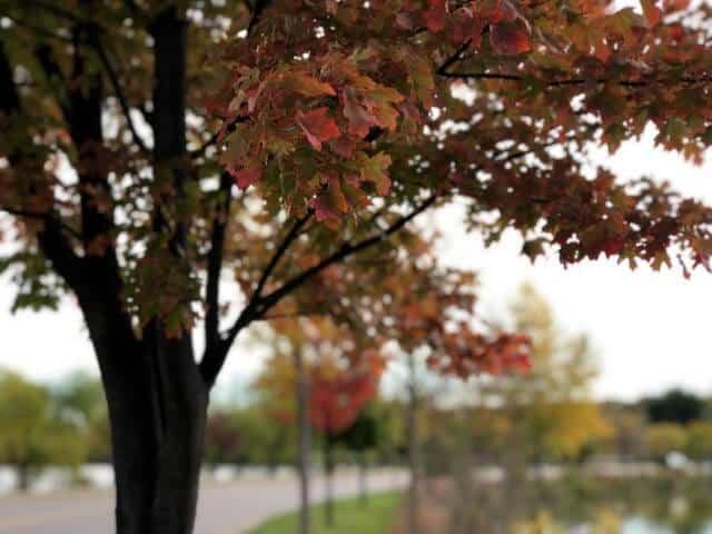 fall in Alexandria MN by Lake Winona